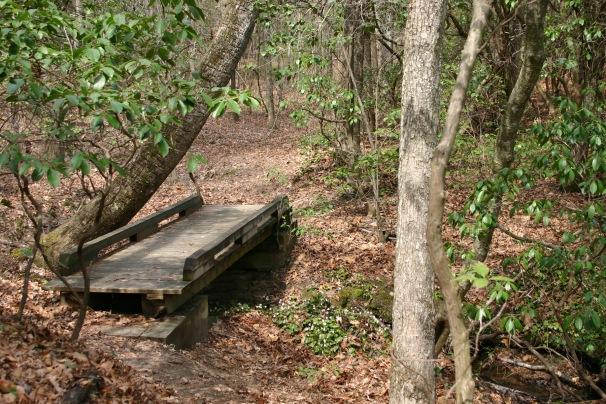 oconee-bell-trail-devils-fork-state-park